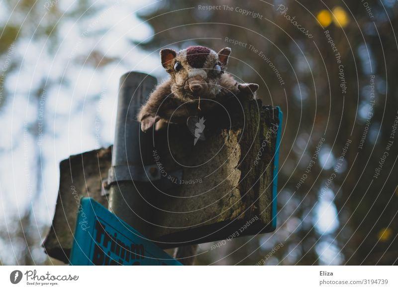 Creep Tier Wald außergewöhnlich Wildtier Schilder & Markierungen gruselig vergessen unheimlich Stofftiere Starrer Blick