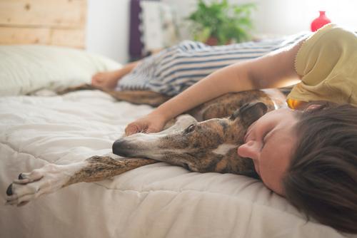 Hund Farbe weiß Haus Tier Winter Herbst Wärme lustig Familie & Verwandtschaft Glück Stil grau Freundschaft modern warten