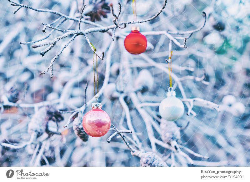 Weihnachtsrote Glaskugeln auf Baumzweigen Lifestyle elegant Winter Schnee Dekoration & Verzierung Tapete Feste & Feiern Weihnachten & Advent