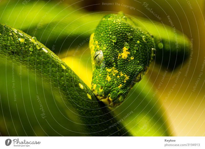 Schlange nach dem Sport Natur Tier Wildtier Tiergesicht Zoo 1 grün Farbfoto Nahaufnahme Zentralperspektive Tierporträt