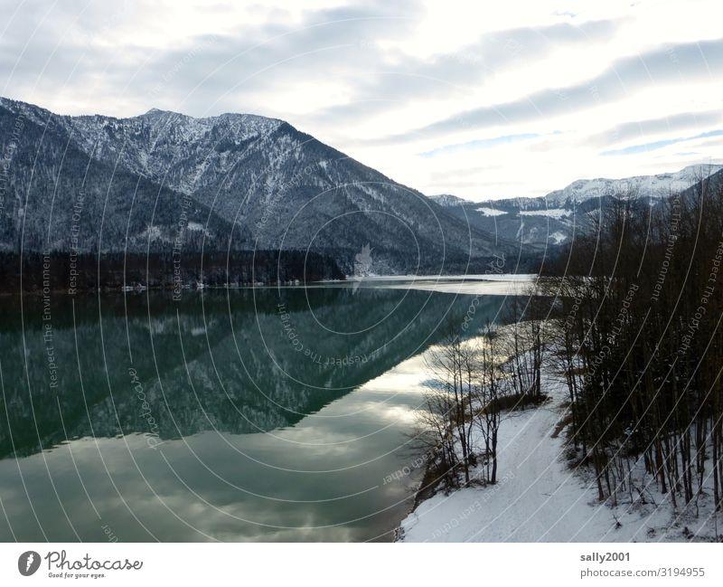 Winter am See... Natur Landschaft Wolken Baum Alpen Berge u. Gebirge Schneebedeckte Gipfel Sylvensteinspeicher kalt grün ruhig stagnierend Frost Bayern Erholung