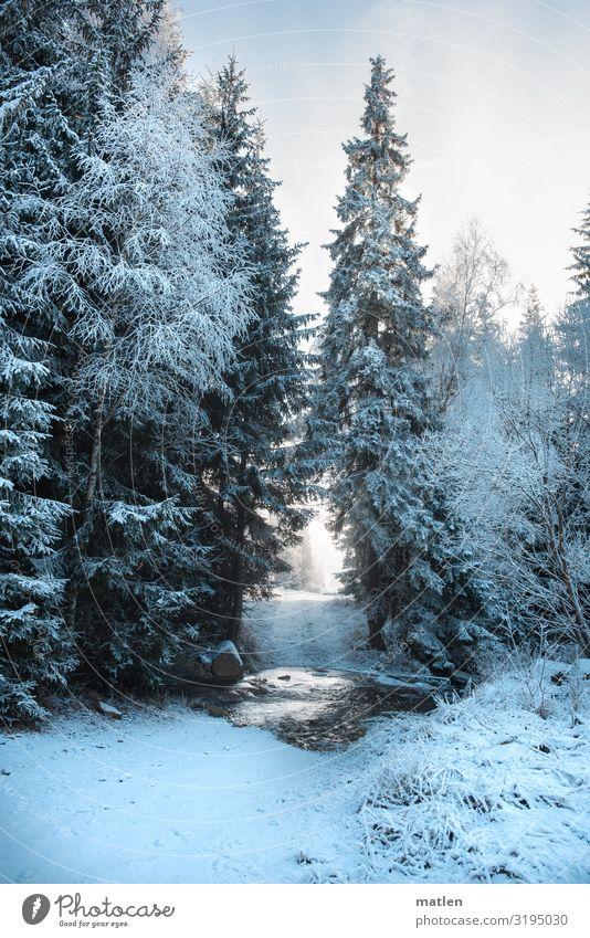 Furt Natur Landschaft Pflanze Himmel Wolken Winter Schönes Wetter Eis Frost Schnee Baum Wald Berge u. Gebirge Bach Menschenleer kalt blau braun weiß
