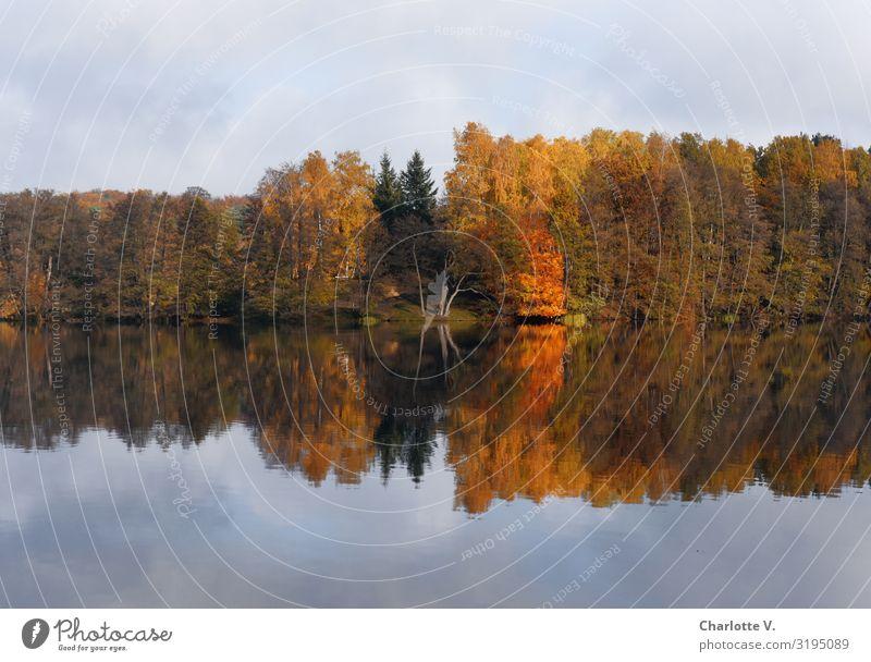 Brandenburger Herbst II Umwelt Natur Landschaft Pflanze Urelemente Wasser Himmel Schönes Wetter Baum Seeufer Liepnitzsee leuchten ästhetisch Freundlichkeit