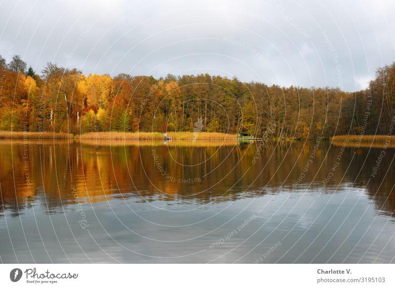 Brandenburger Herbst I Umwelt Natur Landschaft Urelemente Wasser Schönes Wetter Baum Seeufer Liepnitzsee glänzend leuchten Flüssigkeit Freundlichkeit schön