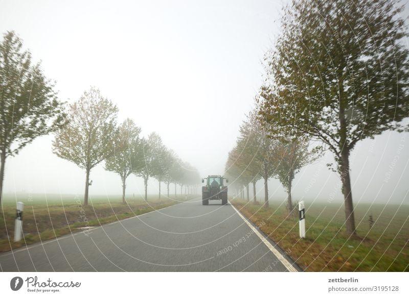 Landstraße im Nebel Dunst gerade geradeaus Herbst Herbstfärbung Landschaft Menschenleer Morgen Perspektive Ferne Sonne Straße Textfreiraum Traktor Wetter Winter