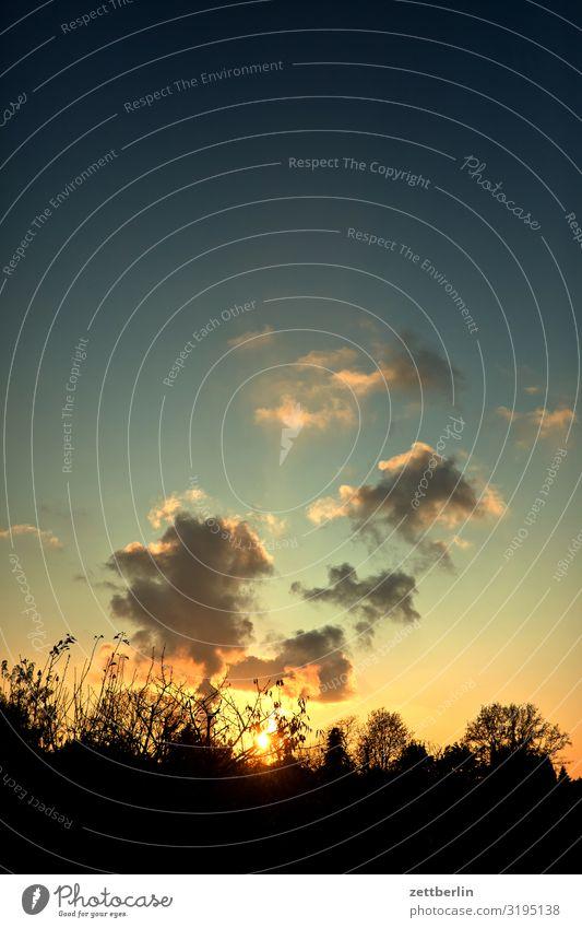 Wolken am Abend Abenddämmerung Ast Baum Dämmerung Feierabend Ferien & Urlaub & Reisen Garten Herbst Himmel Himmel (Jenseits) Schrebergarten Kleingartenkolonie