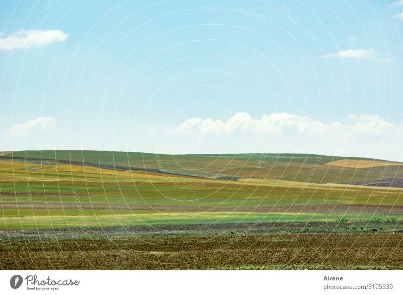 Mischkultur Landwirtschaft Forstwirtschaft Ackerbau Gemüsebau Landschaft Himmel Wolken Sommer Schönes Wetter Nutzpflanze Feld Ebene Anatolien