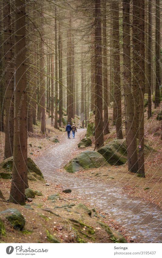 Die Seele baumeln lassen bei einem Waldspaziergang Gesundheit Wohlgefühl Zufriedenheit Erholung ruhig Ferien & Urlaub & Reisen Berge u. Gebirge wandern Natur