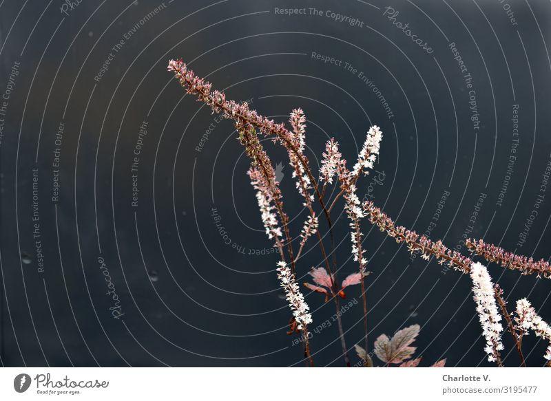 Planten und Blomen III | UT HH19 Umwelt Natur Pflanze Blume Blüte Stein Linie Blühend leuchten stehen Tanzen verblüht Wachstum ästhetisch dünn einfach elegant