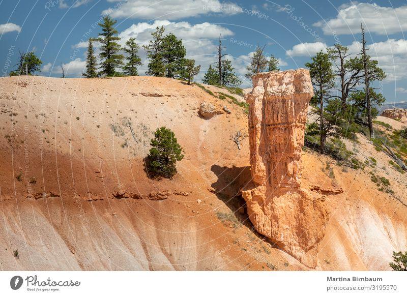 Hoodoos und Bäume am Bryce Canyon, Utah Ferien & Urlaub & Reisen Berge u. Gebirge Natur Landschaft Himmel Park Felsen Schlucht Denkmal Stein gold rot