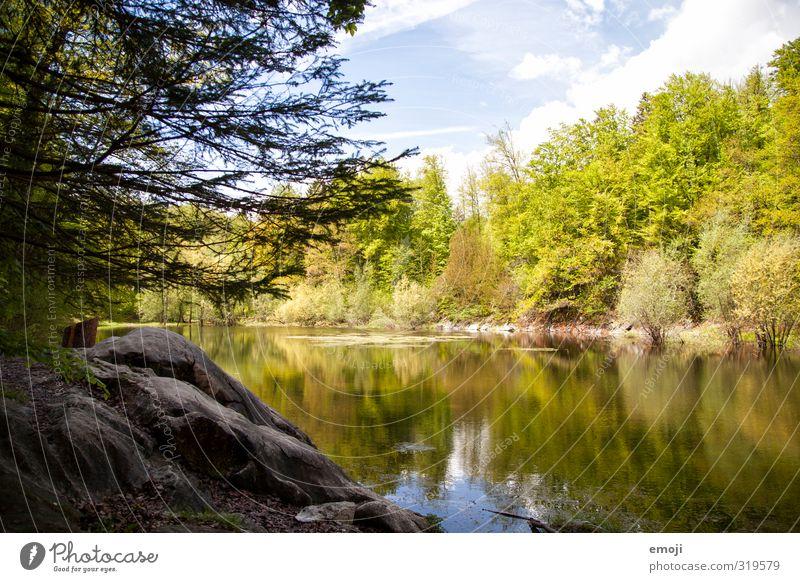 Tümpel Natur grün Baum Landschaft Umwelt Frühling natürlich Schönes Wetter Teich Naturschutzgebiet