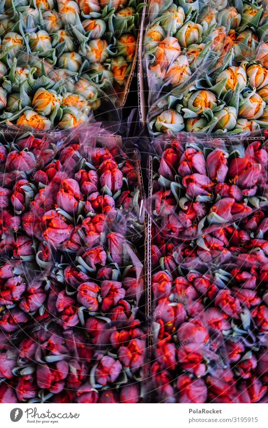 #S# Flower Power Pflanze Tier ästhetisch Blume Blumenstrauß Tulpe Tulpenknospe Tulpenblüte Blumenladen Valentinstag Überraschung Freude schenken schön rot