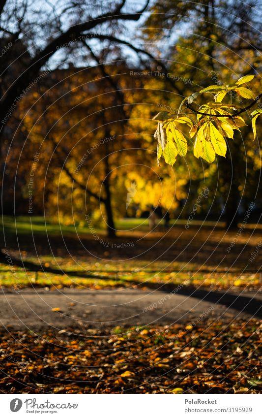 #S# Herbstgelb Natur Freude Glück Fröhlichkeit Herbstlaub herbstlich Herbstfärbung Herbstbeginn Herbstwetter Blatt Wärme genießen Schönes Wetter Jahreszeiten
