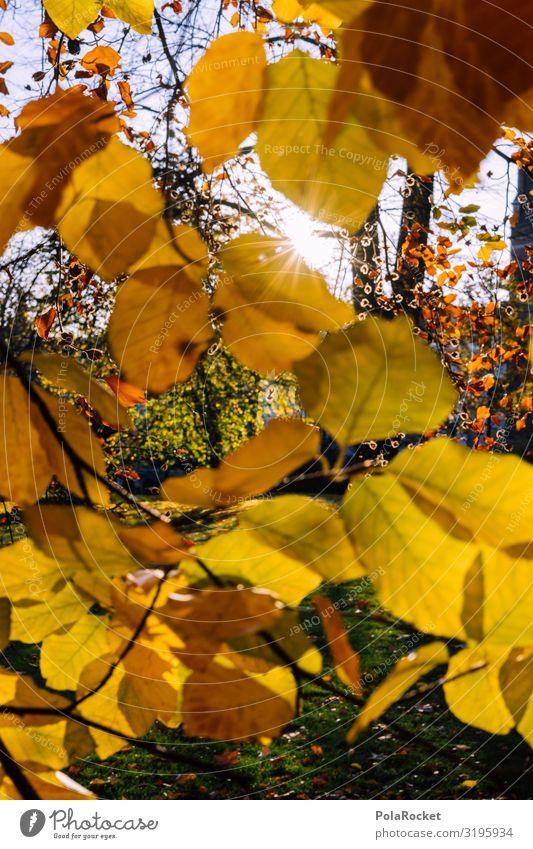 #S# Herbstgelb II Umwelt Natur Landschaft Pflanze Glück Blatt Blätterdach Baum Jahreszeiten Herbstlaub herbstlich Herbstlandschaft Sonne Spaziergang genießen