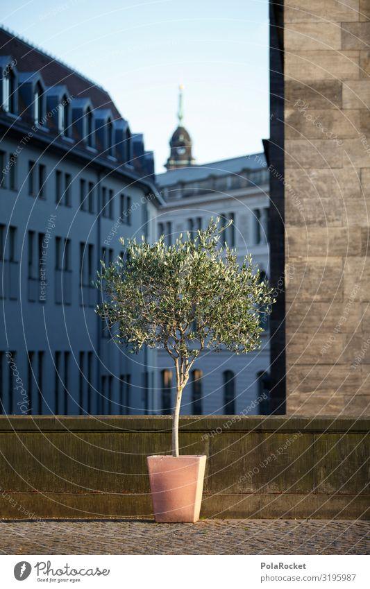 #A0# Da gewinnst du keinen Blumentopf! Kunst ästhetisch Dresden Altstadt dezent Nebensaison Gasse Pflanze Brühlsche Terrasse Farbfoto Gedeckte Farben