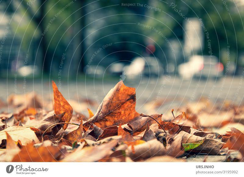 es wird Herbst in der Stadt Klimawandel Wetter Blatt Grünpflanze Hamburg Stadtzentrum Unendlichkeit Herbststimmung kalt Natur Umweltschutz Winterblues