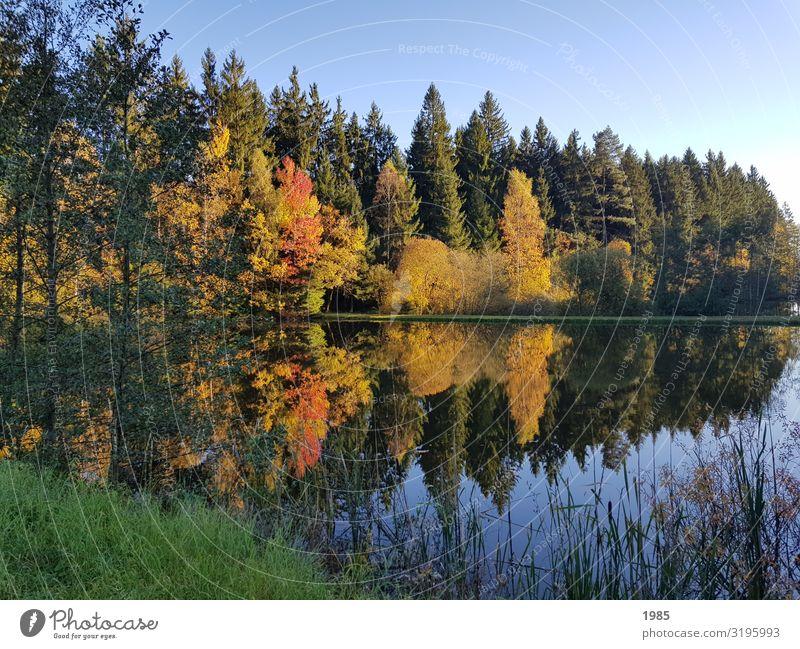 Seespiegelung Natur Landschaft Pflanze Wasser Wolkenloser Himmel Herbst Schönes Wetter Baum Gras Sträucher Wald Seeufer Unendlichkeit Zufriedenheit Begeisterung