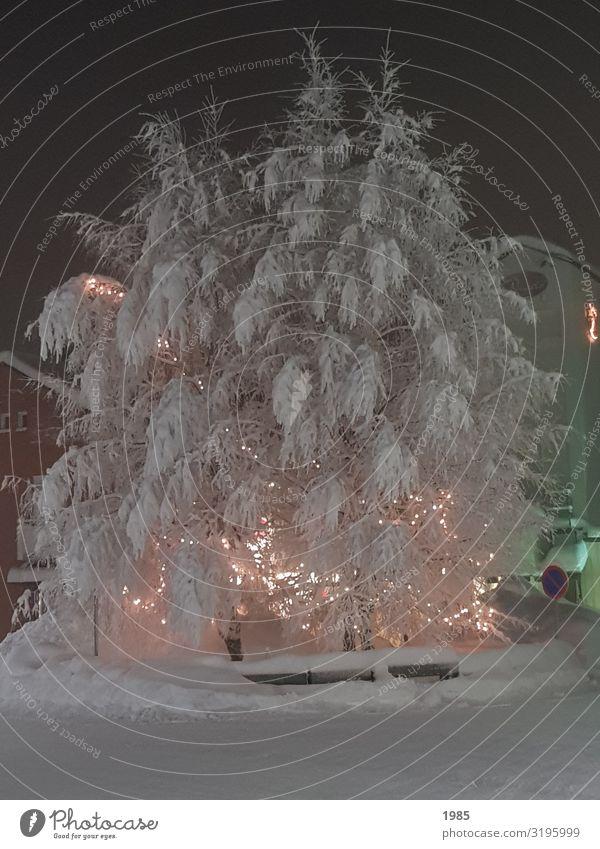Eisbaum Freizeit & Hobby Ferien & Urlaub & Reisen Abenteuer Sightseeing Winter Schnee Winterurlaub Natur Wetter Frost Baum Dorf Menschenleer entdecken frieren