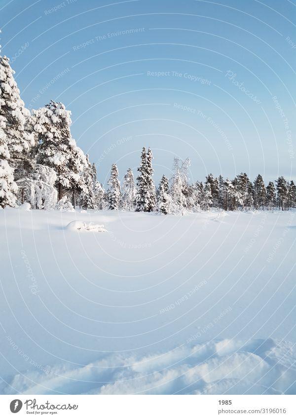 Winter Wonderland Schnee Winterurlaub wandern Natur Landschaft Himmel Wolkenloser Himmel Eis Frost Baum frieren glänzend Blick frei Unendlichkeit kalt natürlich