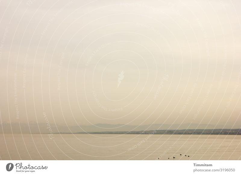 AST 7 | Himmel überm See Ferien & Urlaub & Reisen Umwelt Natur Landschaft Urelemente Wasser Horizont Bodensee ästhetisch natürlich grau violett schwarz ruhig
