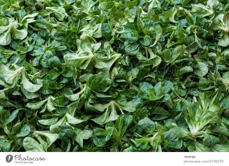 Feldsalat Lebensmittel Salat Salatbeilage Ernährung Bioprodukte Vegetarische Ernährung Wochenmarkt frisch Gesundheit viele Farbfoto Außenaufnahme Nahaufnahme