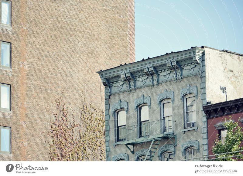 Erzähl mir bitte noch was von früher Himmel Wolkenloser Himmel Pflanze Baum Efeu Kletterpflanzen New York City Stadt Stadtzentrum Altstadt Menschenleer Haus