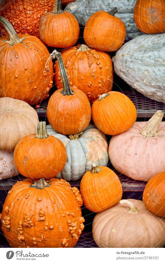 Massenpanik vor Halloween Lebensmittel Gemüse Kürbis Kürbiszeit Kürbisgewächse Ernährung Essen Feste & Feiern Marktstand Landwirtschaft Forstwirtschaft Business