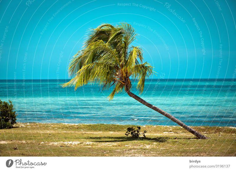 Schieflage Sommerurlaub Strand Meer Horizont Sonnenlicht Klimawandel Schönes Wetter Palme Palmenstrand Küste Kuba Karibisches Meer Wachstum authentisch