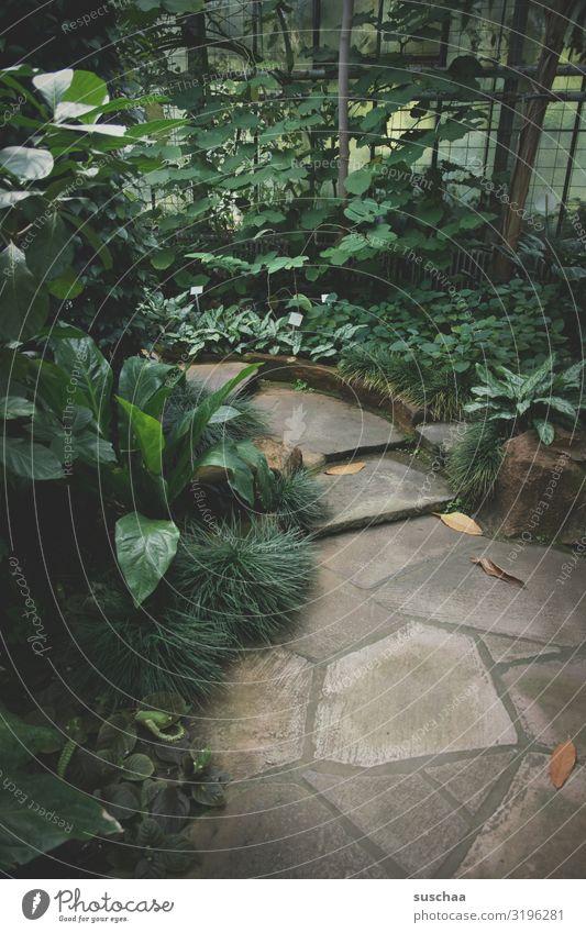 der weg ins grüne Natur Pflanze Erholung Blatt ruhig Wege & Pfade Treppe Fußweg Wellness Urwald Botanik Botanischer Garten Steinweg