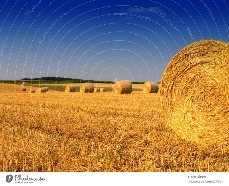Rundballen Herbst Feld Landwirtschaft Ernte Niedersachsen Strohballen