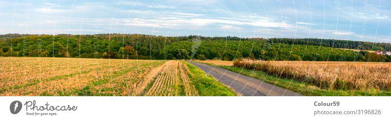Mittelhessische Landschaft Sommer Landwirtschaft Forstwirtschaft Natur Schönes Wetter Feld Wald genießen gelb Zufriedenheit Erholung Europa Hintergrundbild