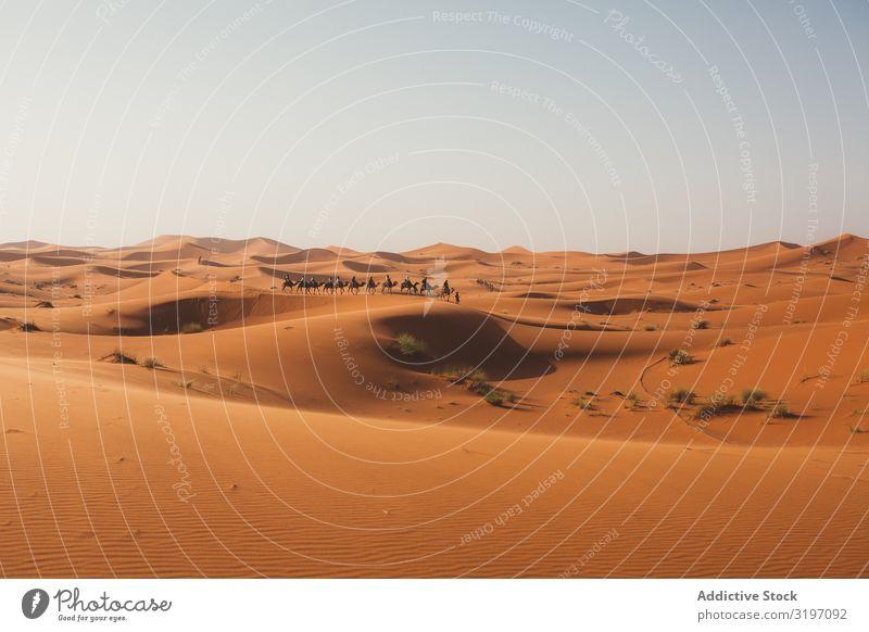 Silhouette von Reisenden auf Kamelen bei Sonnenuntergang Wüste Karavane Düne Marokko Ferien & Urlaub & Reisen Sand Ausflug Natur heizen minimalistisch Horizont