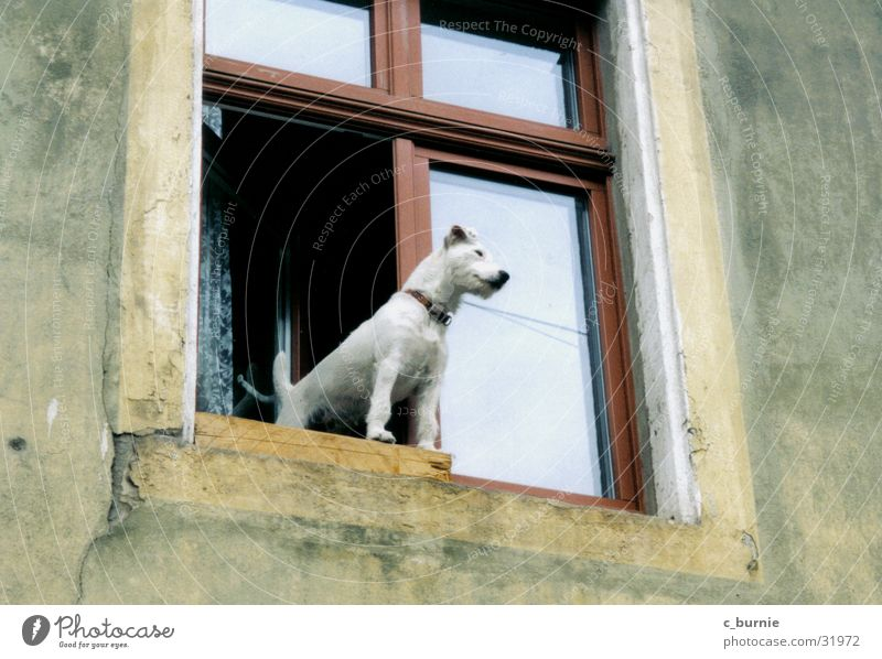 who let the dog out? weiß Haus Wand Fenster Hund Halsband Hundehalsband