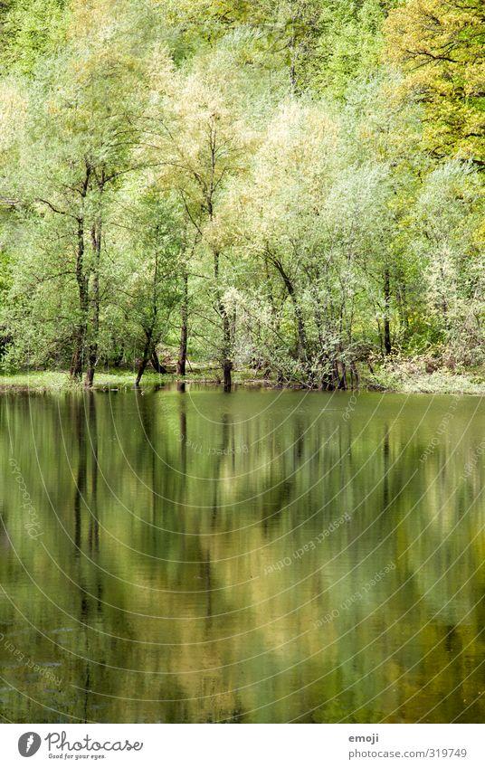 aquarell Umwelt Natur Landschaft Frühling Baum Wald Seeufer Teich natürlich grün Reflexion & Spiegelung Farbfoto Außenaufnahme Strukturen & Formen Menschenleer