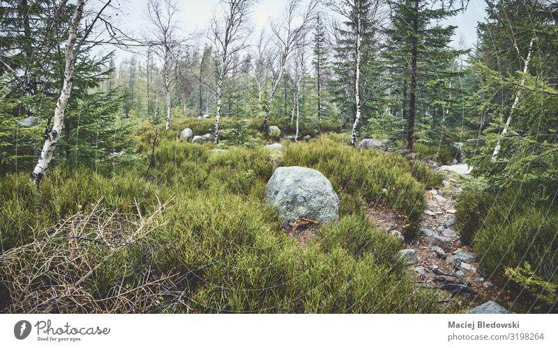 Pfad im Bergwald an einem regnerischen Tag Ferien & Urlaub & Reisen Tourismus Ausflug Abenteuer Camping Berge u. Gebirge wandern Umwelt Natur Landschaft Pflanze