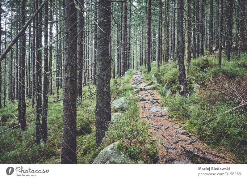 Pfad im Bergwald an einem regnerischen Tag Abenteuer Berge u. Gebirge wandern Umwelt Natur Landschaft Pflanze Herbst Wetter schlechtes Wetter Nebel Regen Baum