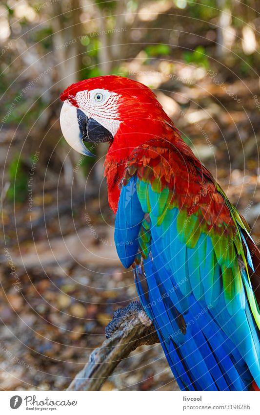 aras, cayo saetia - kuba Freiheit Insel Pflanze Tier Baum Platz Haustier Vogel 1 authentisch außergewöhnlich Coolness schön einzigartig lustig Originalität wild