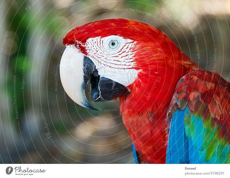 macaw II, cayo saetia - kuba Freiheit Insel Pflanze Tier Baum Platz Haustier Vogel 1 authentisch außergewöhnlich frei Freundlichkeit einzigartig Originalität
