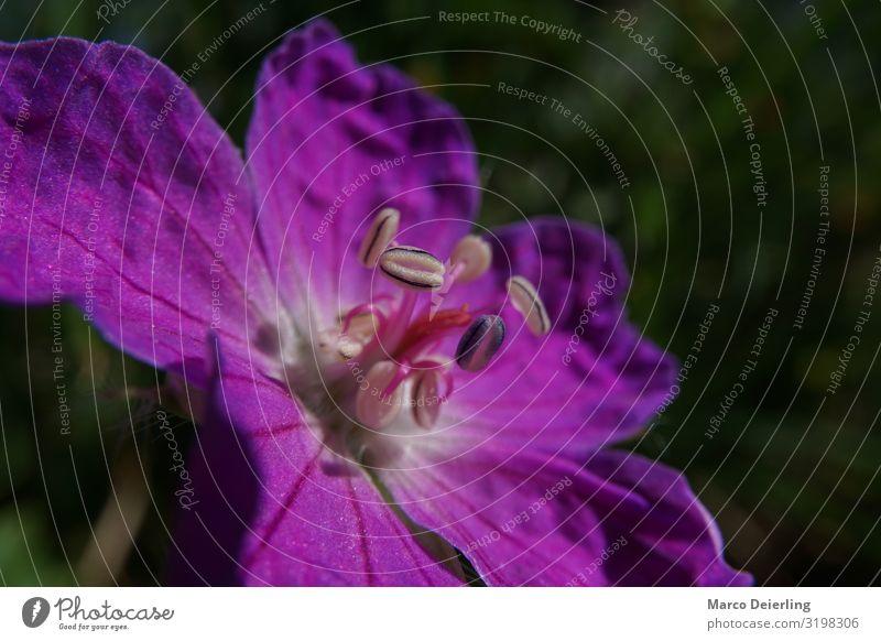Flower Umwelt Natur Pflanze Sommer Klima Blume Blüte Garten Blühend Coolness authentisch exotisch frei Freundlichkeit Fröhlichkeit frisch violett Farbfoto