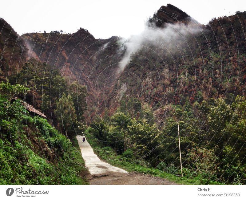 Seruni Point (near Mt. Bromo) Umwelt Natur Urelemente Erde Wald Felsen Berge u. Gebirge Reinlichkeit Sauberkeit Nebel Farbfoto Außenaufnahme Menschenleer