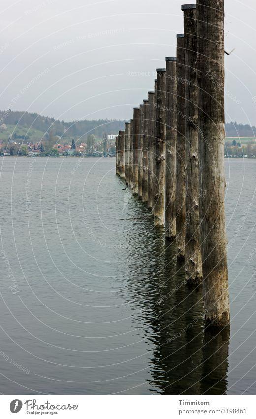 AST 7   Messstäbe (oder so) Ferien & Urlaub & Reisen Umwelt Natur Landschaft Wasser Hügel See Bodensee Pfosten Holz natürlich blau braun grau schwarz Farbfoto