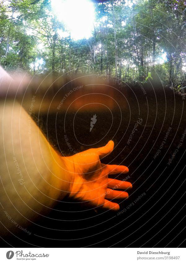 Baden im Rio Negro Ferien & Urlaub & Reisen Natur Pflanze Landschaft Baum See Schwimmen & Baden Angst Wellen Abenteuer Fluss Urwald Sumpf Brasilien Moor