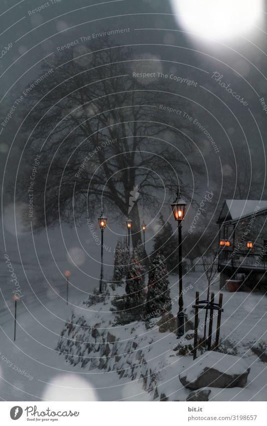 Unscharf l Lichter im Schneefall Umwelt Natur Winter Eis Frost Wald Traurigkeit Sorge Trauer Schneeflocke Schneelandschaft Unschärfe