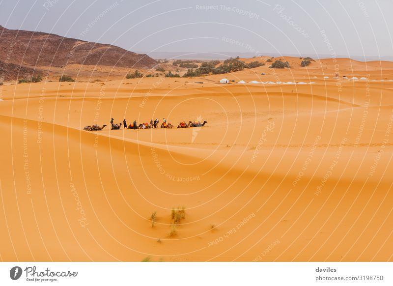 Karawane von Kamelen, die in Merzouga, Marokko, sitzen und darauf warten, eine Wüstentour für Touristen zu machen. Abenteuer Afrika Afrikanisch Tier arabisch