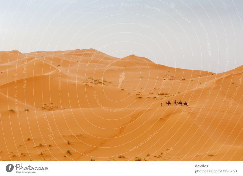 Wunderschöne Wüstenlandschaft und Karawane von Kamelen, die die Szene im Hintergrund durchqueren. Abenteuer Afrika Afrikanisch Tier arabisch Beduinen blau Camel