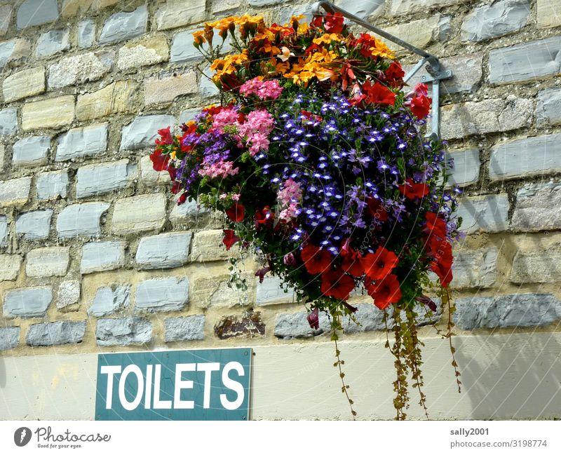 hübsche Toiletten... Blume Haus Mauer Wand Schriftzeichen Schilder & Markierungen Hinweisschild Warnschild hängen ästhetisch Freundlichkeit einzigartig