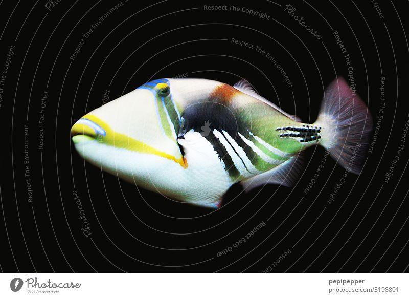 bunter fisch Freizeit & Hobby tauchen Ferien & Urlaub & Reisen Ausflug Wasser Tier Wildtier Tiergesicht Schuppen Zoo Aquarium Fisch 1 Ornament Linie