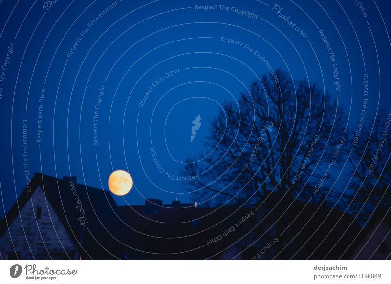Der voll Mond über den Dächern. Der Himmel ist dukelblau. Rechts davon ist ein Baum ohne Blätter. Freude ruhig Haus Umwelt Vollmond Schönes Wetter Stadt Bayern
