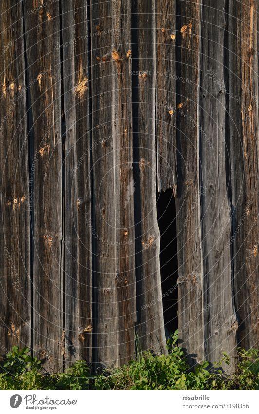 Holzwand mit Loch | Trash 2020 Wand draußen Durchgang Geheimgang Lücke durch durchschauen durchsehen durchschlüpfen Eingang Ausgang geheim versteckt Versteck