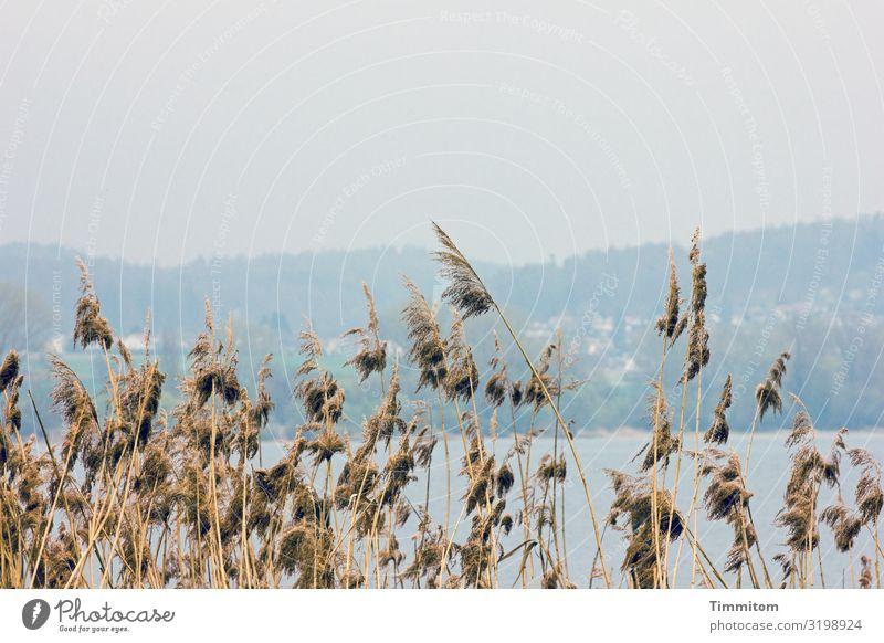 AST 7 | Dahinter der See Ferien & Urlaub & Reisen Umwelt Natur Landschaft Urelemente Wasser Wetter Bodensee natürlich blau braun Gefühle ruhig Gelassenheit
